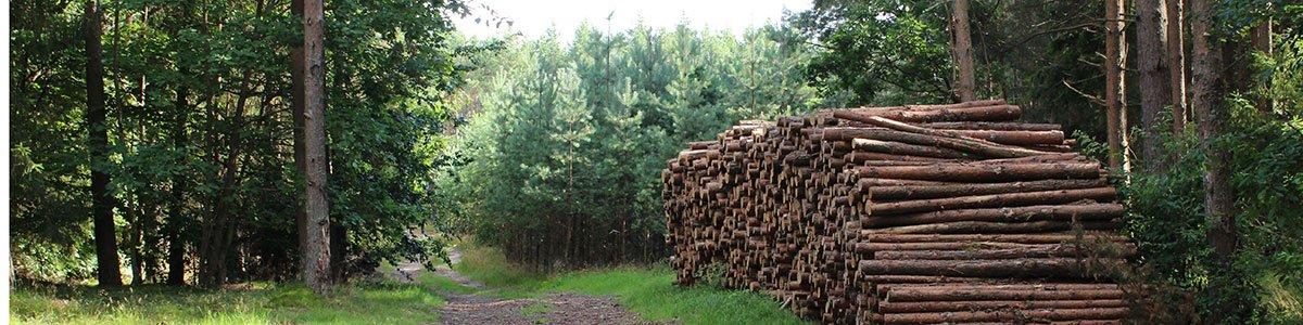 Wald, Natur und Handwerk